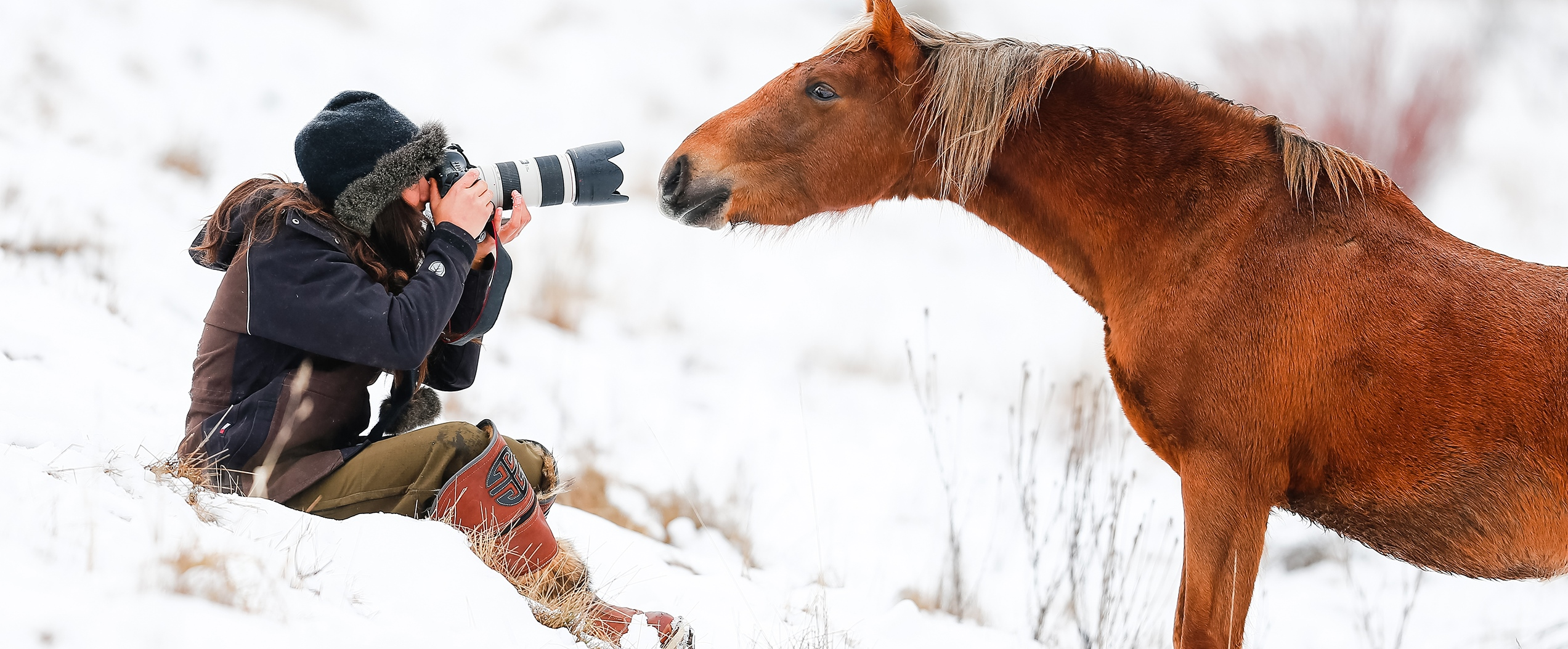 The Wild Colt who Loved Humans: Australian Snowy Mountains, Wild Horses of the World