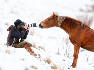 The Wild Colt who Loved Humans: Australian Snowy Mountains,...