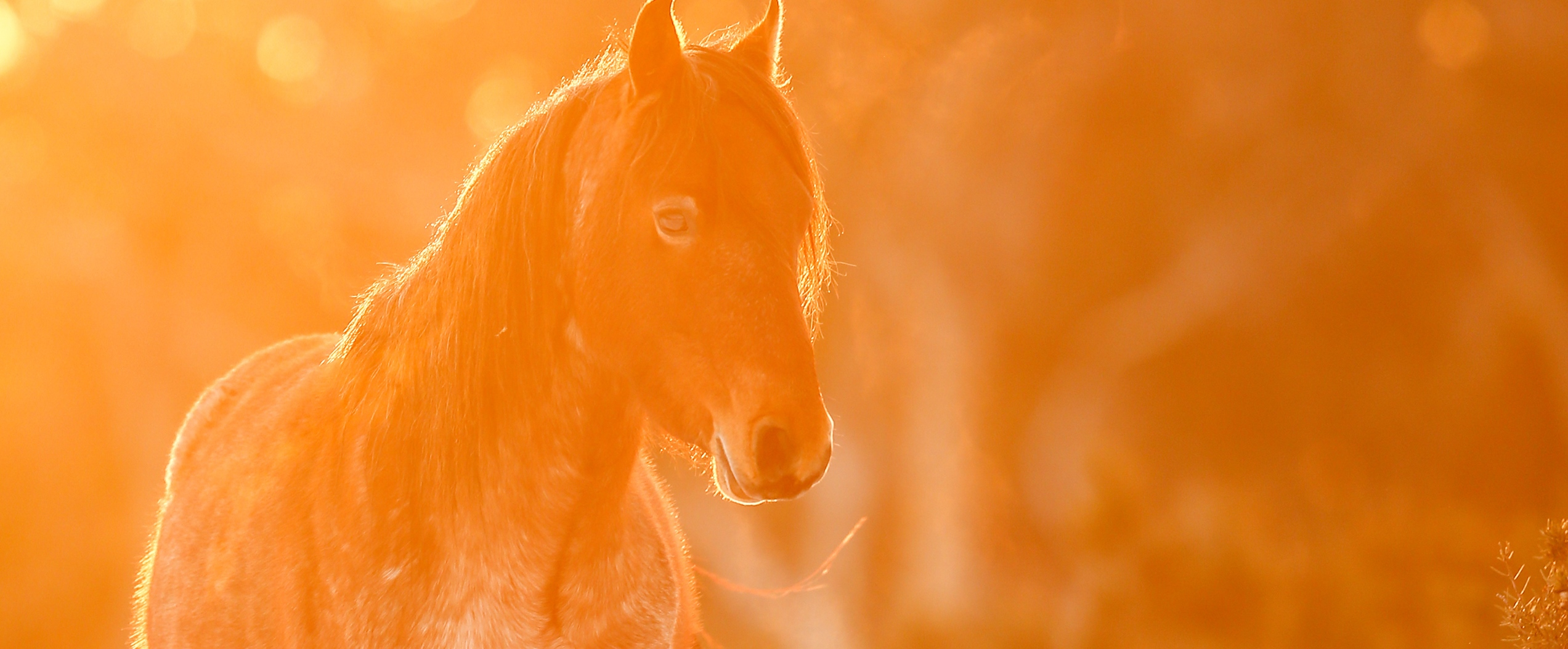 The Lone Brumby Colt: Australian Snowy Mountains, Wild Horses of the World