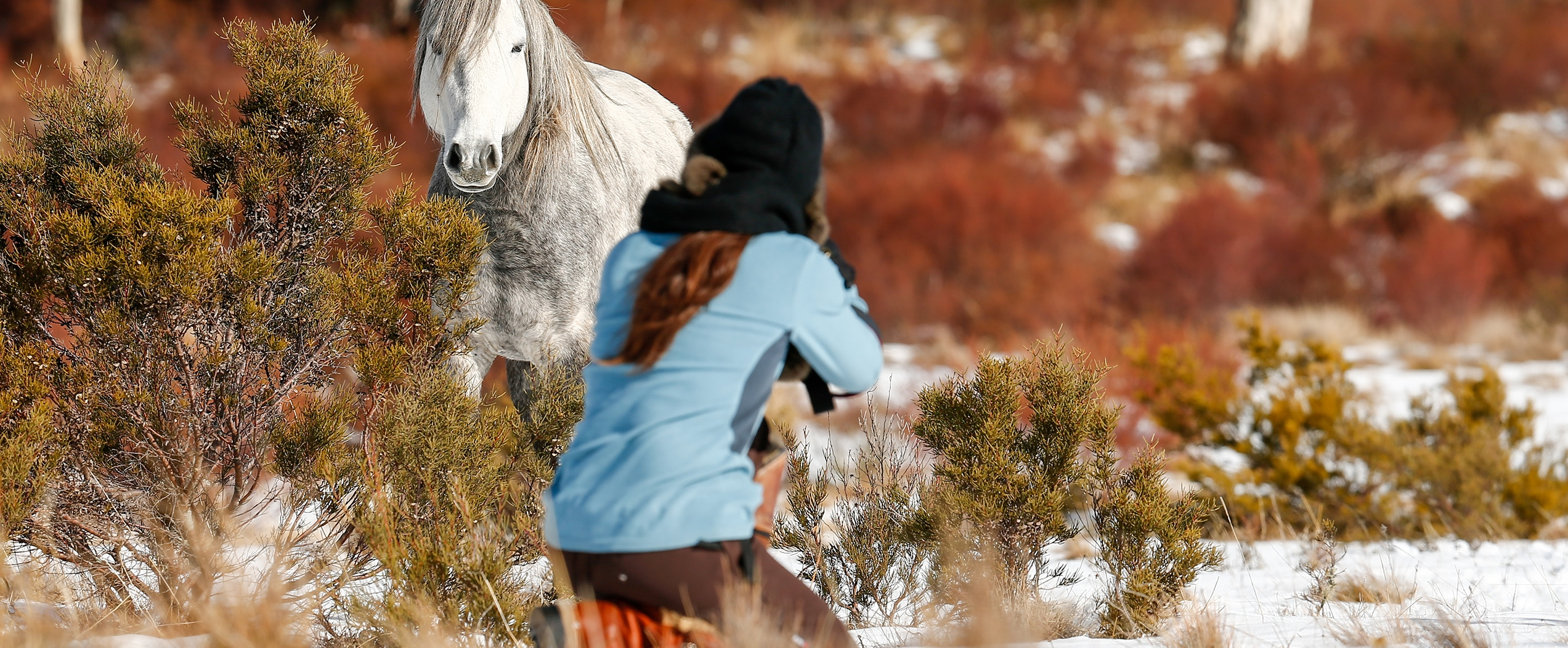 Victory's Herd: Australian Snowy Mountains, Wild Horses of the World