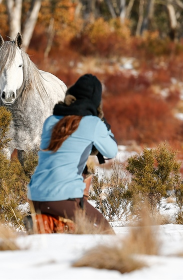 Victory's Herd: Australian Snowy Mountains, Wild Horses of...