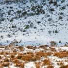 The Lone Stallion: Australian Snowy Mountains, Wild Horses of the World