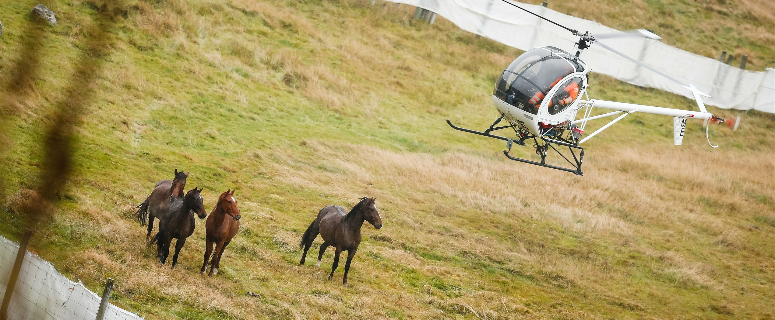 The heartbreak of Watching Helicopters Round Up New Zealand's Wild Horses